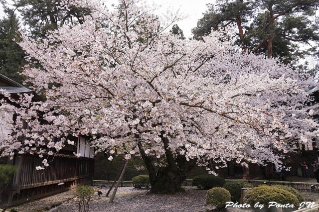 hirosaki1704B-0026.jpg