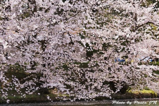hirosaki1704B-0035.jpg