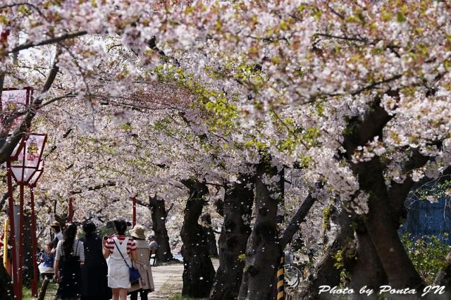 hirosaki1704B-0036.jpg