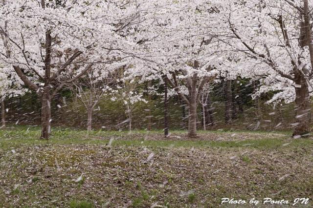 hirosaki1704B-0046.jpg