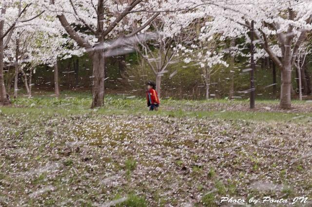 hirosaki1704B-0047.jpg