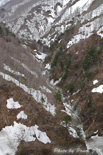 hirosaki1704B-0053.jpg