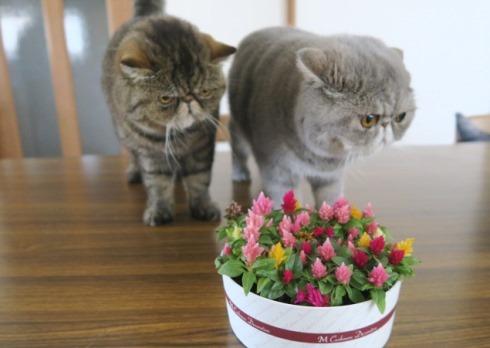 10)=お花れつよ