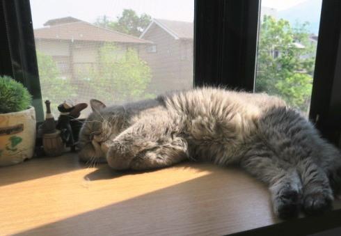 1)ガッツポーズで寝ています