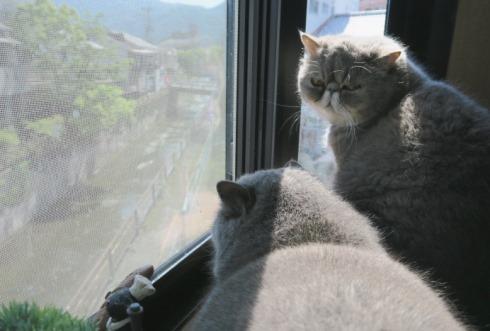 13)マルタとぷくたん♡♡♡出窓