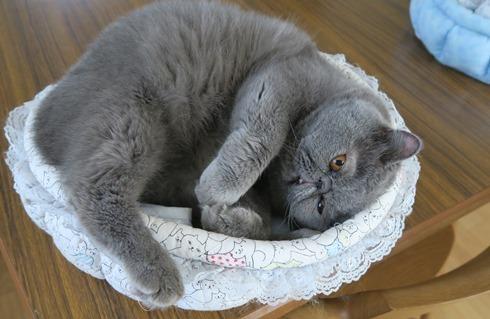 3)寝たふりが一番でず