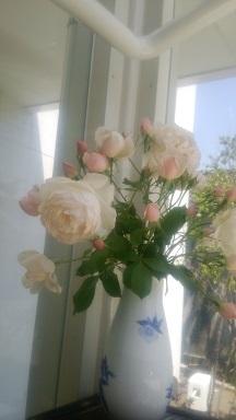 29年5月14日 母の日(バラ)