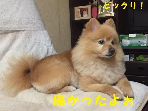 IMG_7040_201705100123204a3.jpg