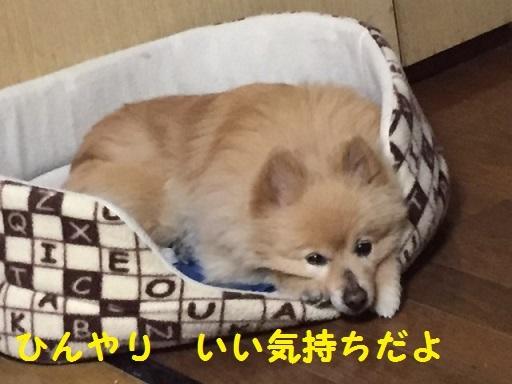 IMG_7079_1.jpg