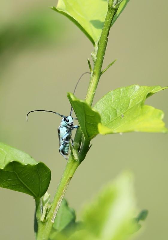 昆虫2170610