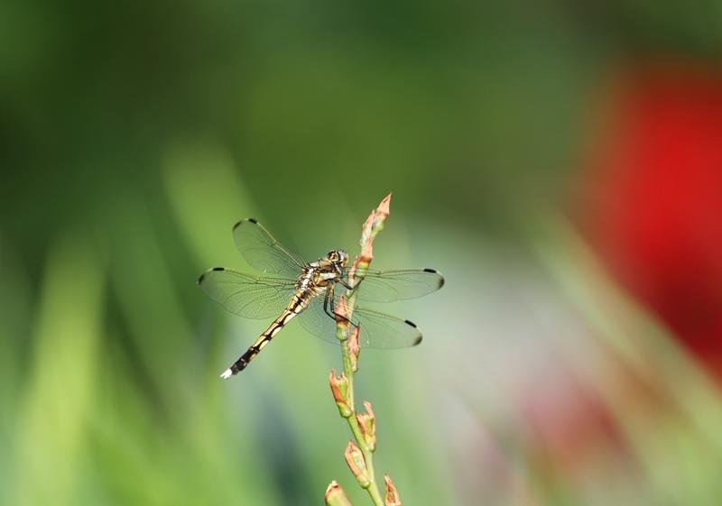 昆虫4170610