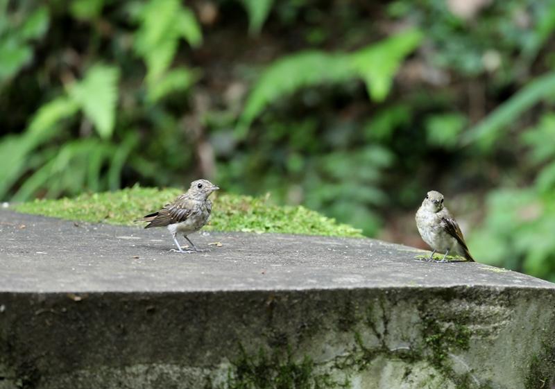 幼鳥1170727