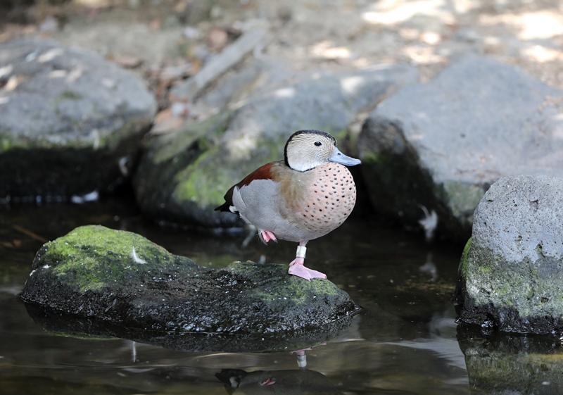 鳥5170816