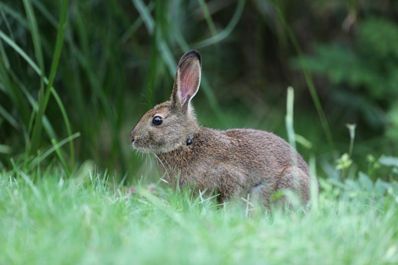 ウサギ1170908