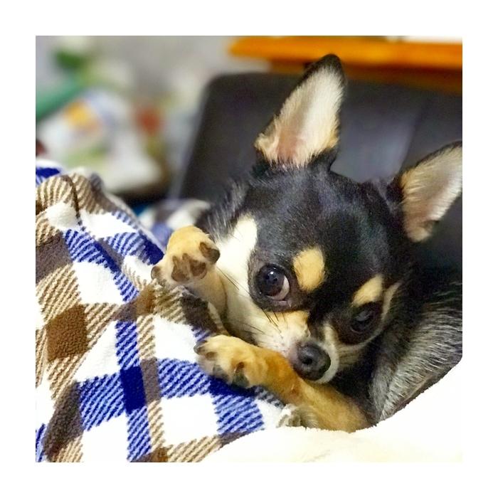 2017-07-08 ちまき ブログ用