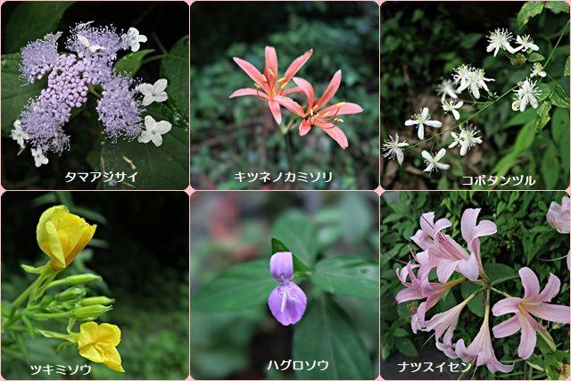 渓流沿いの花々