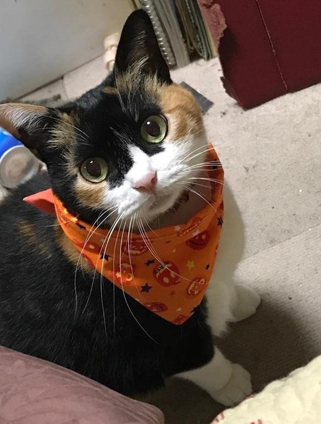 猫さんバンダナ