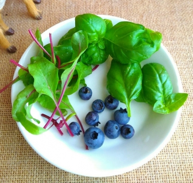 blueberry basil babyleaf