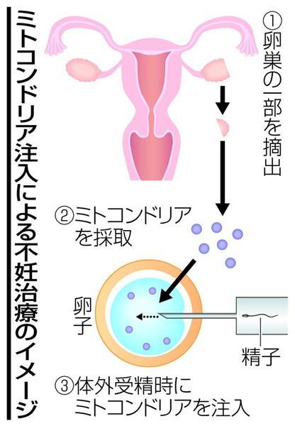 wst1706210082-p1_ミトコンドリア注入による不妊治療のイメージ
