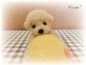 5月黄色ピンクッション4