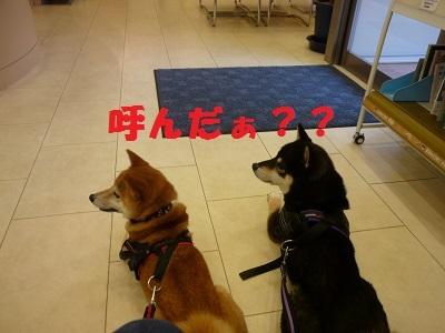 blog12070.jpg