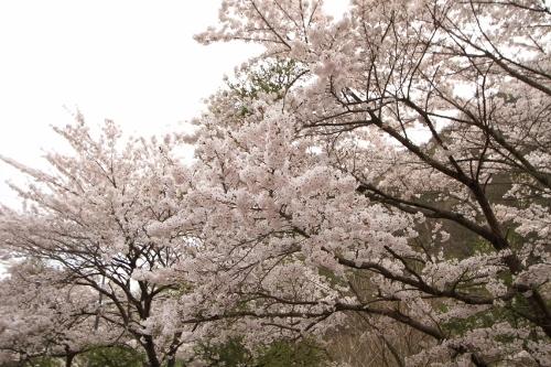 5月今年初の菅平_27
