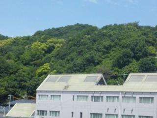山手大学 新緑