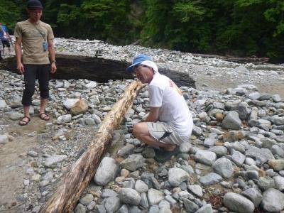 青田も木を切る