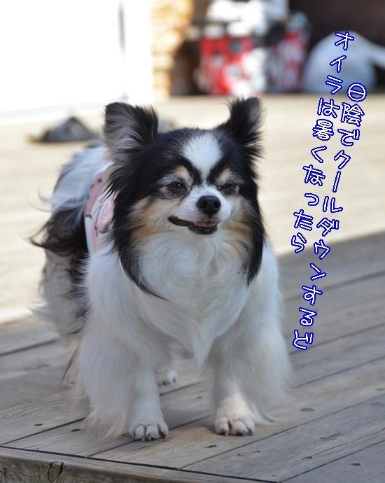 DSC_2871_201705232147404ac.jpg