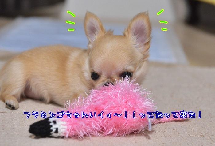 DSC_3872_20170727214124d38.jpg