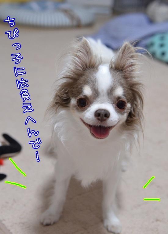 DSC_4117_20170812210240c4b.jpg