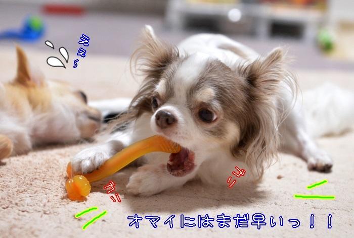 DSC_4160_20170822192746d46.jpg