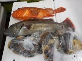 20鮮魚セット2017519