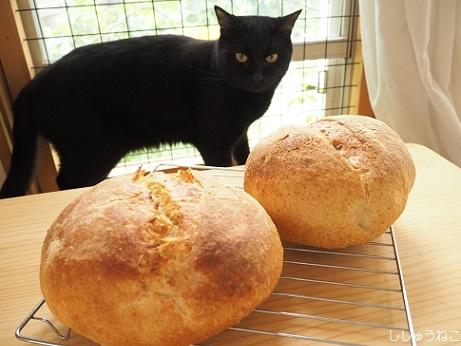 パンと黒猫20170803