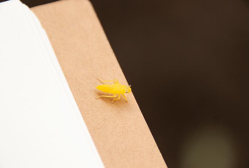 ツマグロヨコバイ幼虫IMG_0406