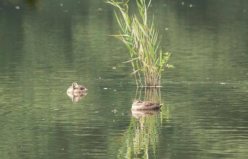 平和な池IMG_0535
