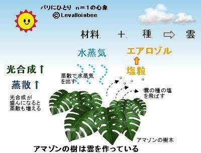 熱帯雨林は雲の材料と種を作る