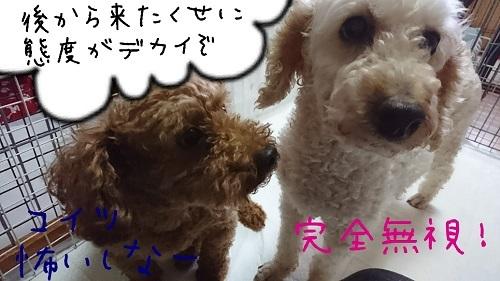 せな夢0626