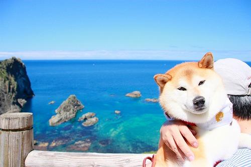 積丹ブルーと海
