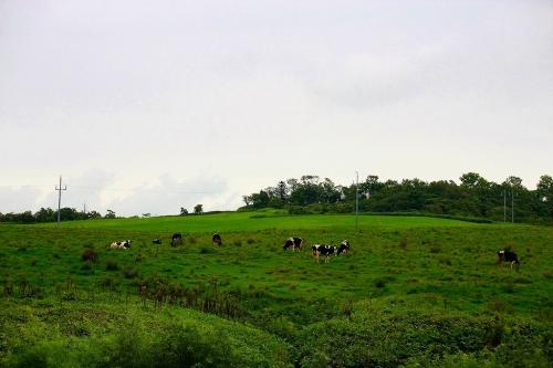 宗谷の酪農