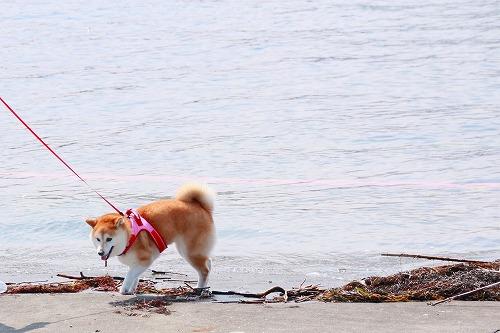 海辺の華ちゃん