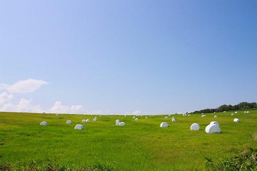 牧草ロール白