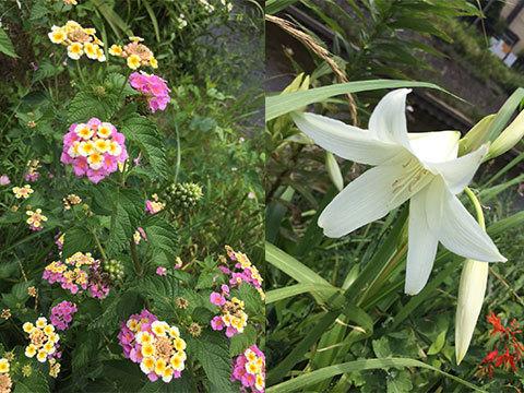初夏の花02