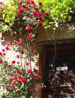 水彩くらぶ勉強会薔薇の影