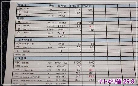 2017.5.22検査結果