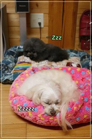 お疲れちゃんで、爆睡だったよ^^;;