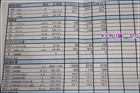 2017.6.12検査結果