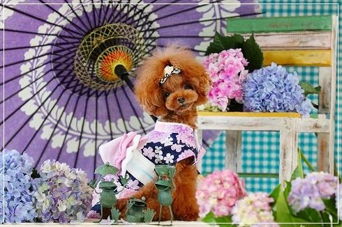 紫陽花と梅雨@ひなちゃん