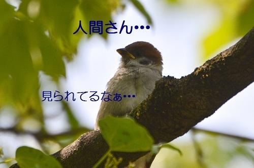 010_20170519220540785.jpg