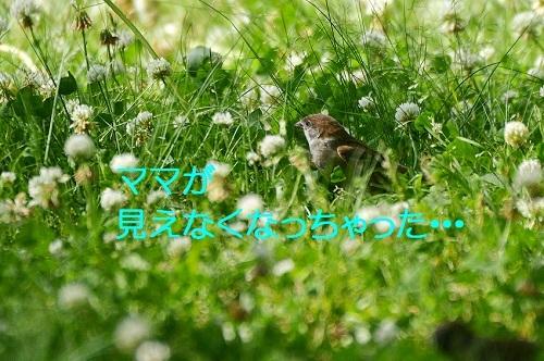 010_20170608191402478.jpg